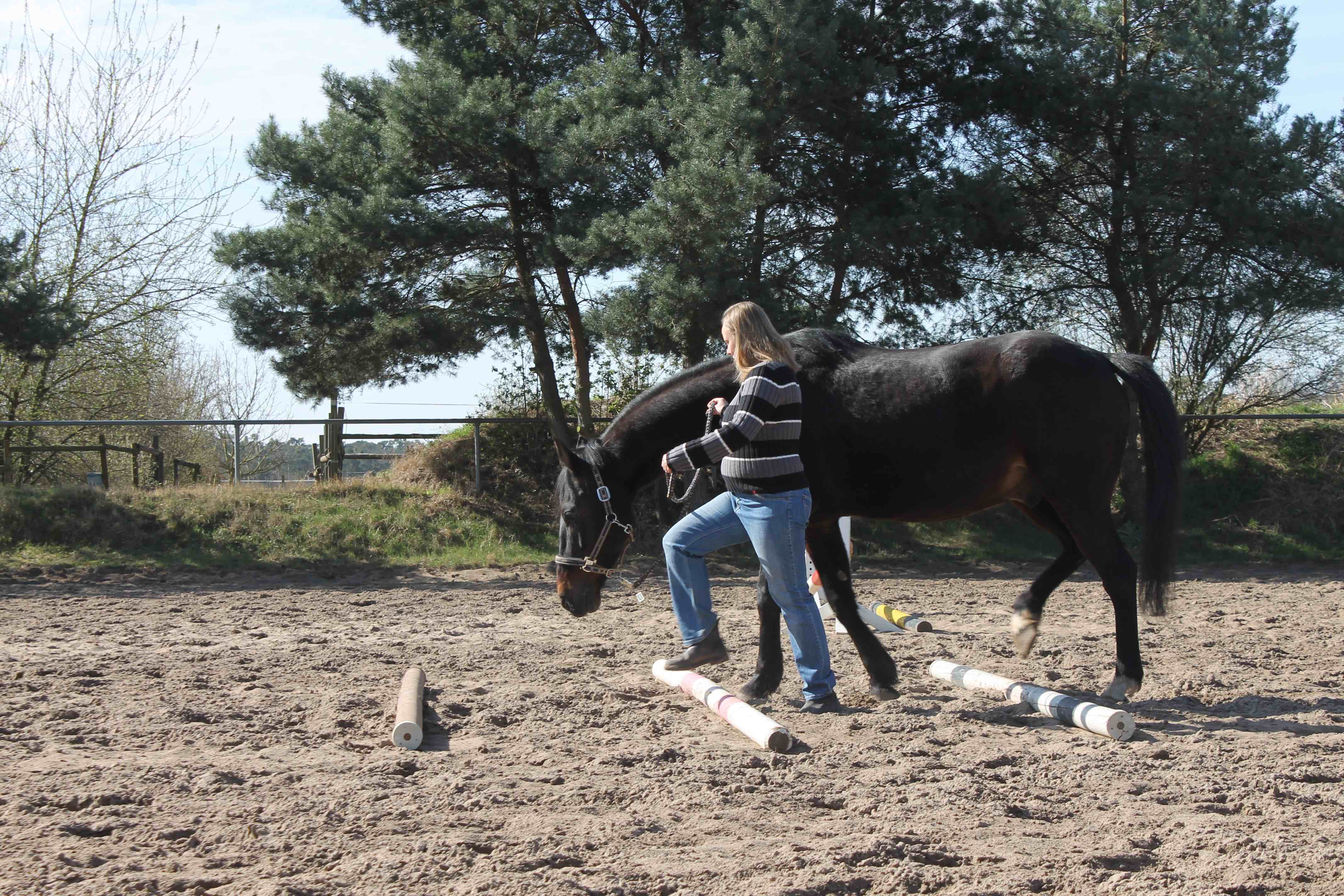 Horse Based Training